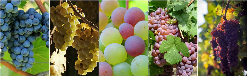 5 benefits of grapes seed oil on your skin