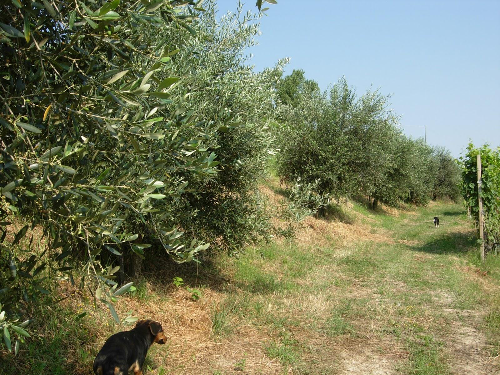 L'olio dell'azienda agricola Josetta Saffirio