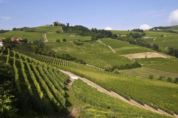 An itinerary for the summer: from Sale San Giovanni to Monforte d'Alba