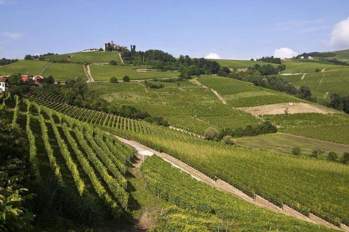 Un itinerario per l'estate: da Sale San Giovanni a Monforte d'Alba