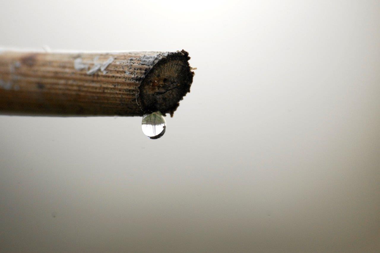 Il «pianto della vite»: l'emozione della vigna che si risveglia