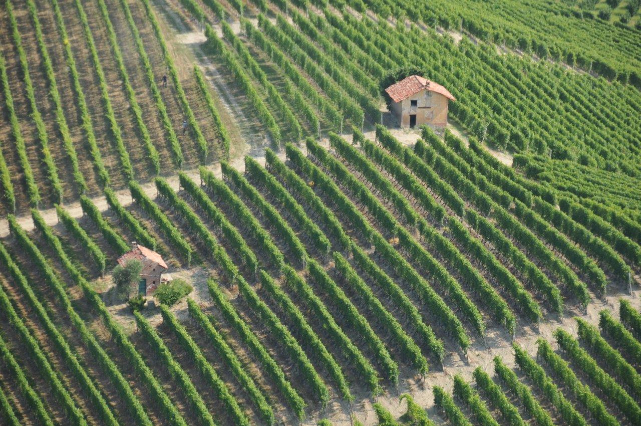 "The vineyards ""ciabot"" UNESCO World Heritage of Langhe, Monferrato and Roero"